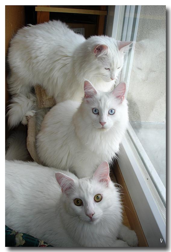 Mes 3 flocons Trio_2010_11_19_1
